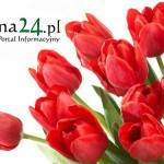 kwiaty-luzna